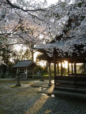 桜202001