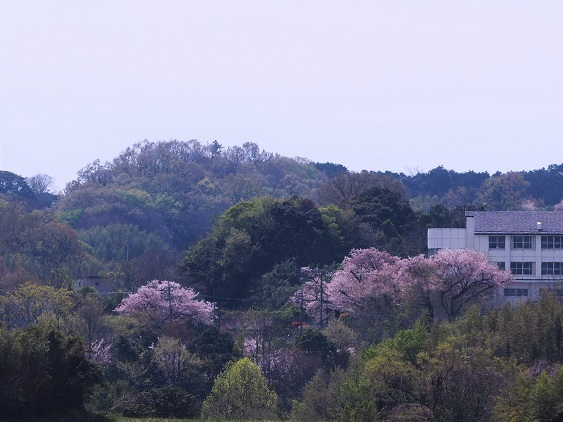 satoyamanoharu3.jpg
