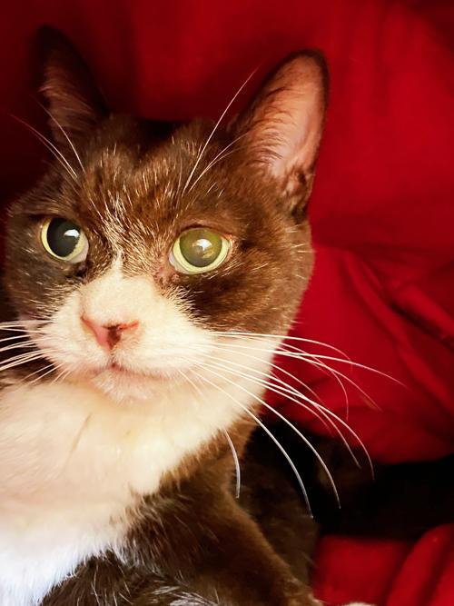 今回は暗い中でも可愛い猫の顔の撮影に成功したように思う。