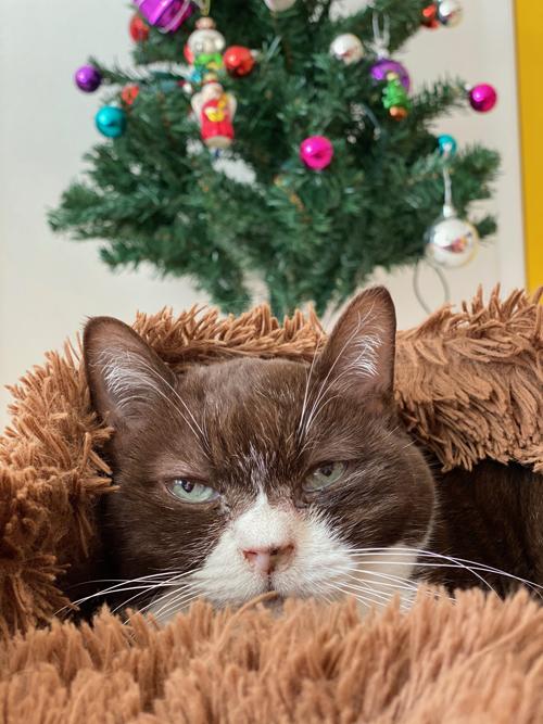 クリスマスっぽいことがしたいクリスマスイブ