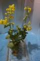 ブロッコリー菜の花