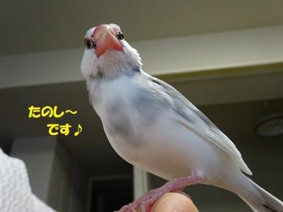 DSC08489済