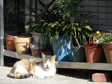 通りすがりに見かけた猫(806)