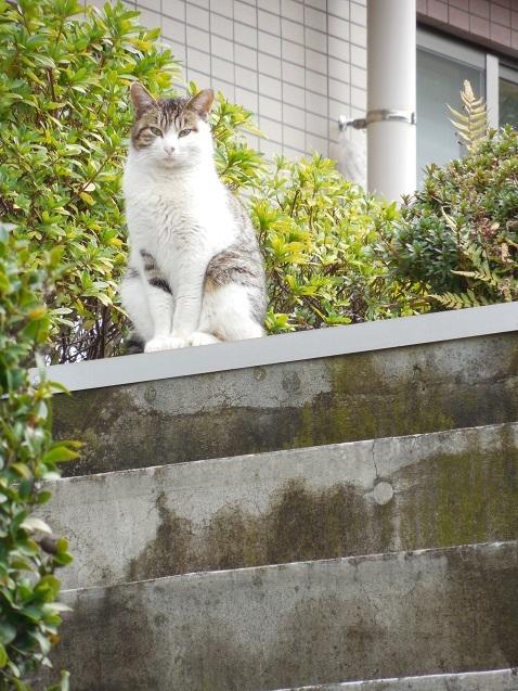 通りすがりに見かけた猫(808)