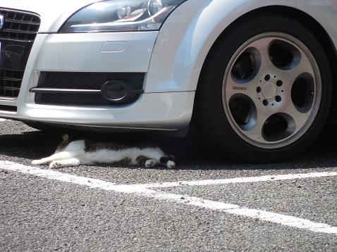 通りすがりに見かけた猫(809)