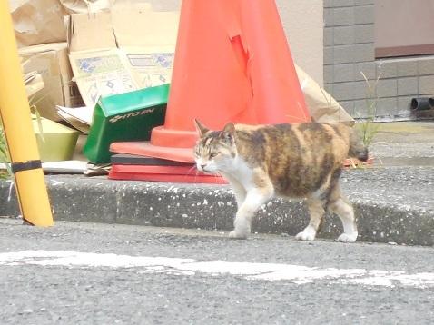 通りすがりに見かけた猫(810)