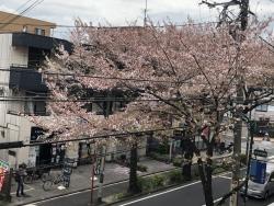 2021 半分葉桜