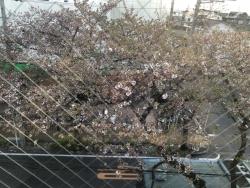 葉桜バス通り