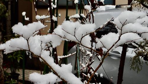 朝の雪 (1)