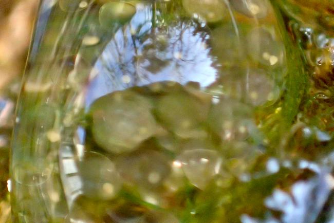サカマキガイの卵塊と風景