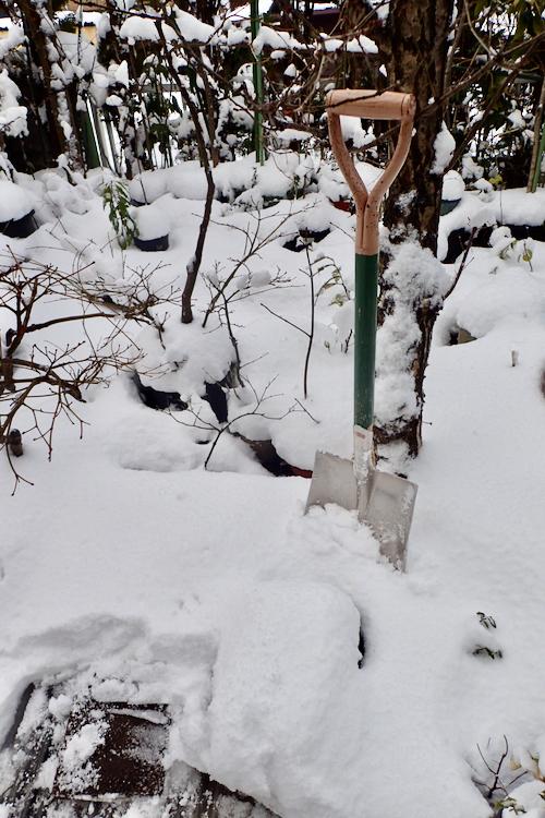 池の上の雪