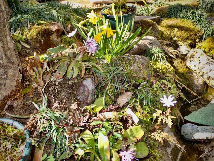 池の周りの草花