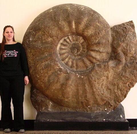 最大の化石は直径2m