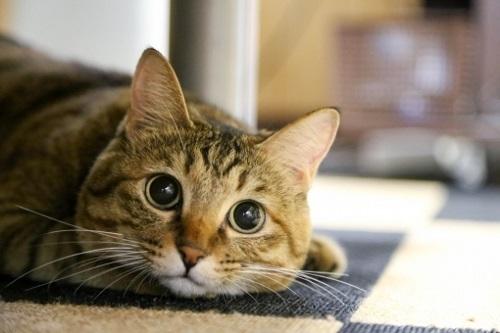 cat-1.jpeg