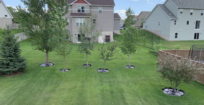 backyard2010.jpg