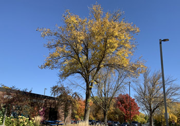fall2008.jpg