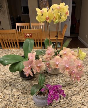 orchid032320.jpg