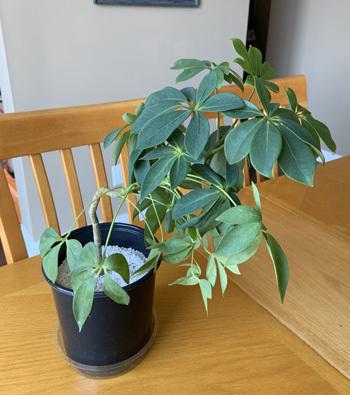 plants04252002.jpg