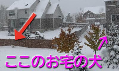 snow10202005.jpg
