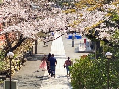高幡不動尊 桜