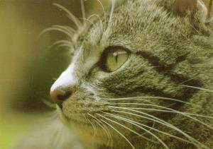 猫3  ドイツ