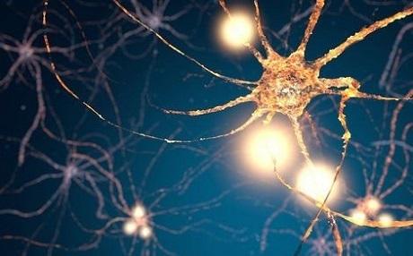 20200927脳神経細胞