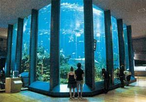 東海大学海洋科学博物館 割引