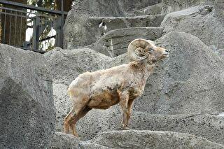 金沢動物園 割引