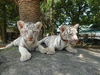 しろとり動物園 割引