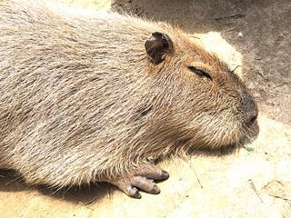 福山市立動物園 割引