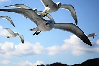 鳥羽湾めぐりとイルカ島遊覧船 割引