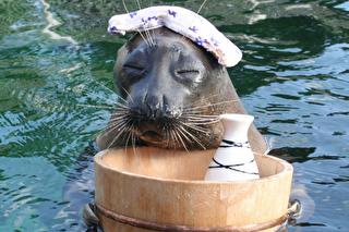 箱根園水族館 割引