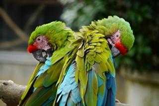 千葉市動物公園 割引