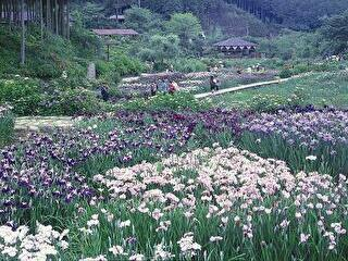滝谷花しょうぶ園 割引