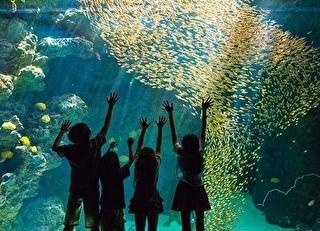 ふくしま海洋科学館(アクアマリンふくしま) 割引