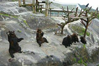 のぼりべつクマ牧場 割引