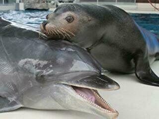 しものせき水族館 割引