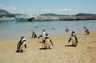 長崎ペンギン水族館 割引