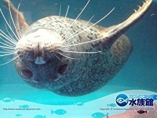 サンピアザ水族館 割引