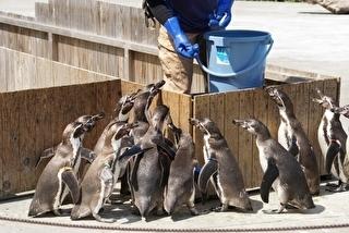 埼玉県こども動物自然公園 割引