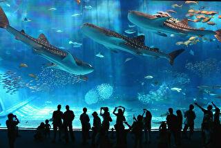 沖縄美ら海水族館 割引