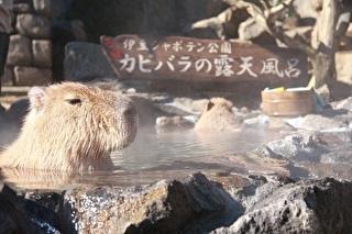 伊豆シャボテン動物公園 割引