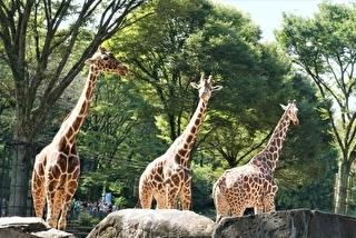 多摩動物公園 割引