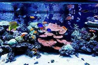 ヨコハマおもしろ水族館 割引