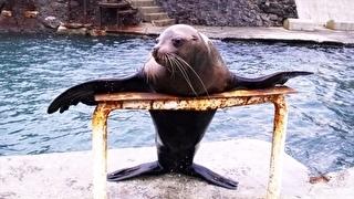 おたる水族館 割引