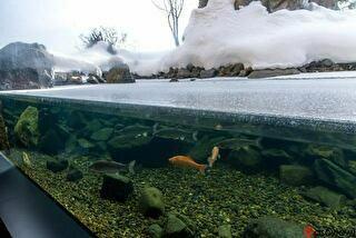北の大地の水族館 割引