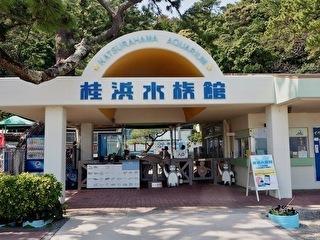 桂浜水族館 割引