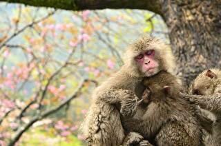 高崎山自然動物園 割引