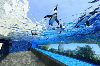サンシャイン水族館 割引