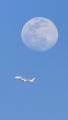 JAL嵐と月